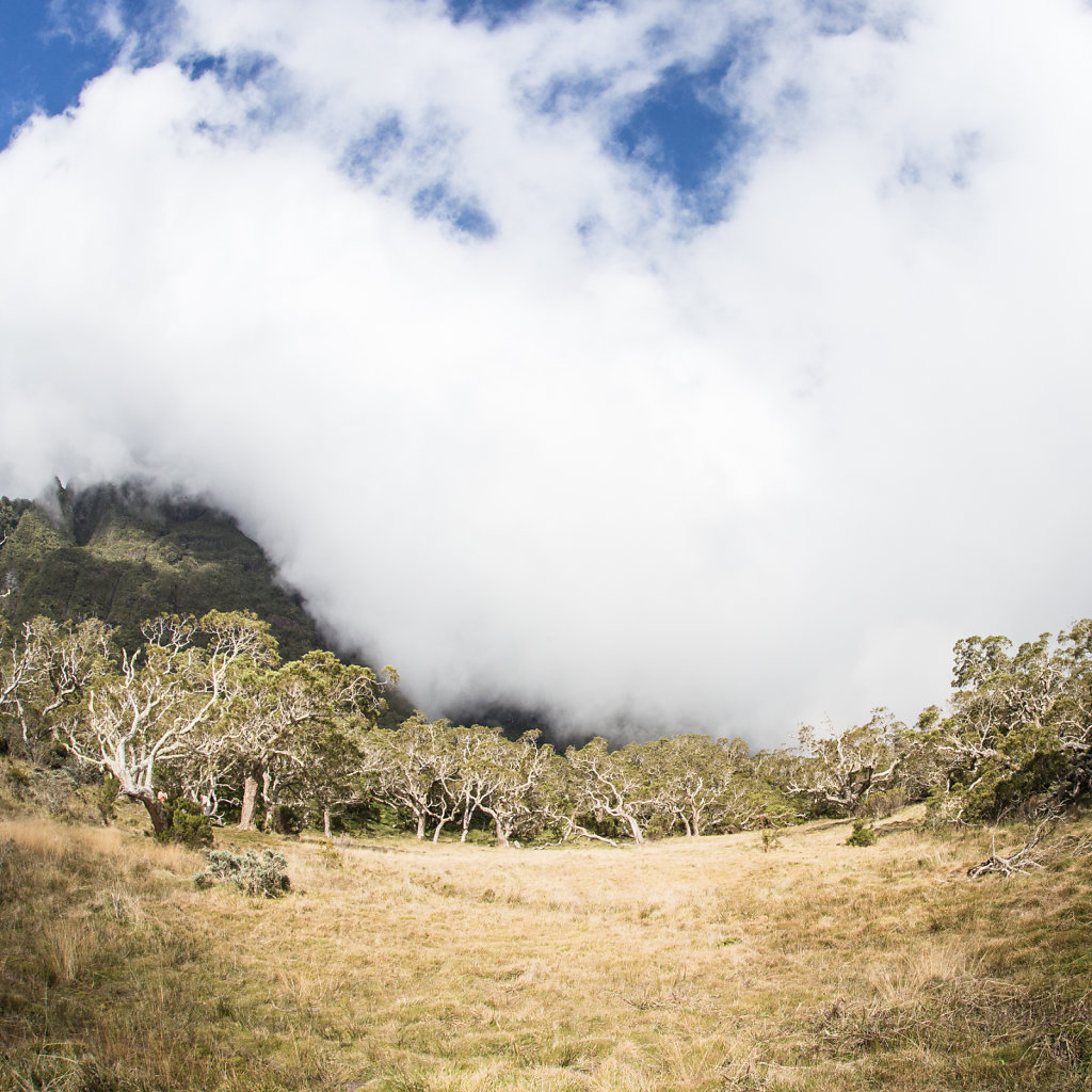 Cold es boeufs, Reunion Island (2013)